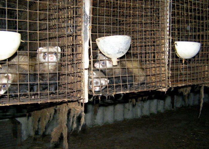 Svoboda zvířat